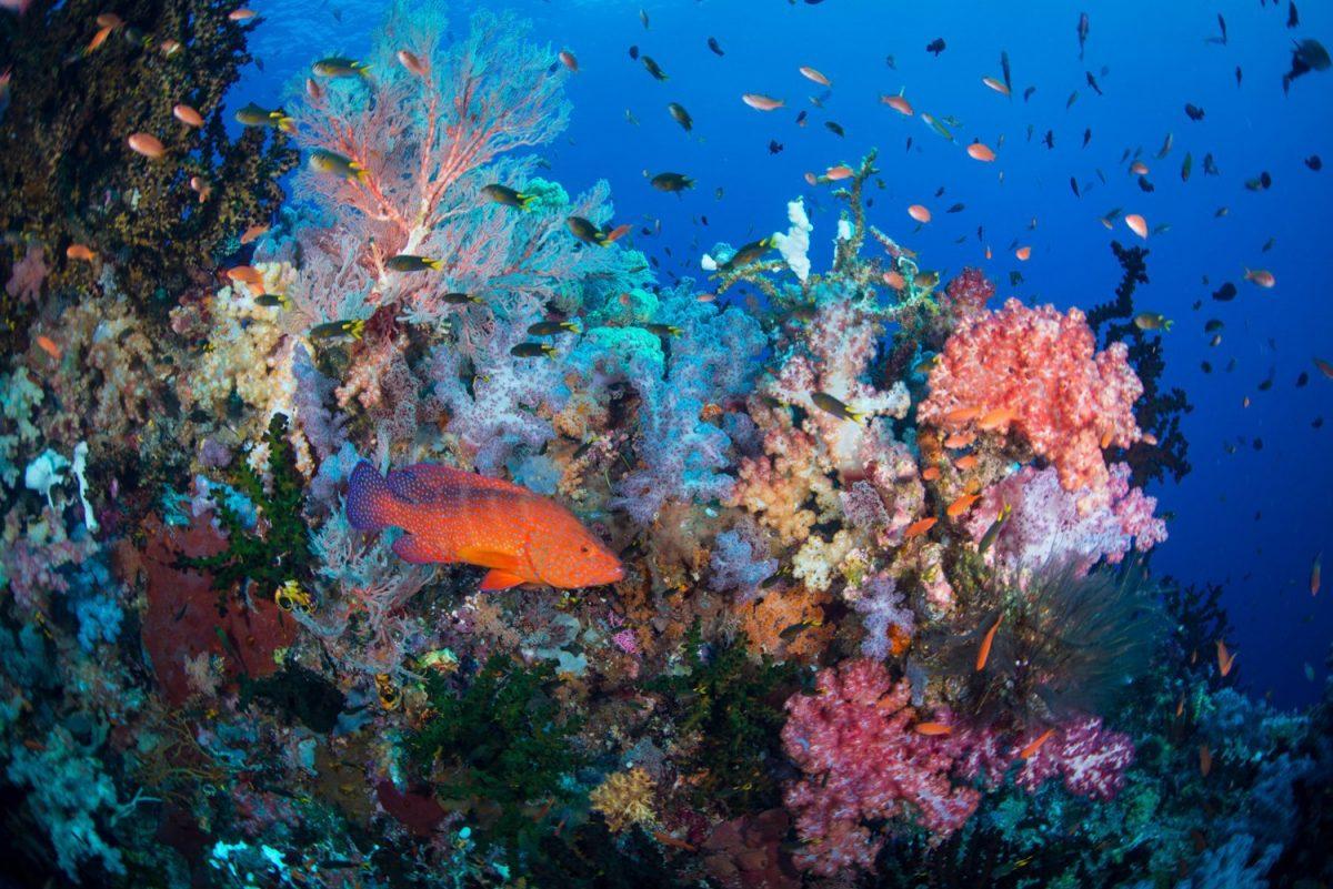 buceo en raja ampat, arrecife