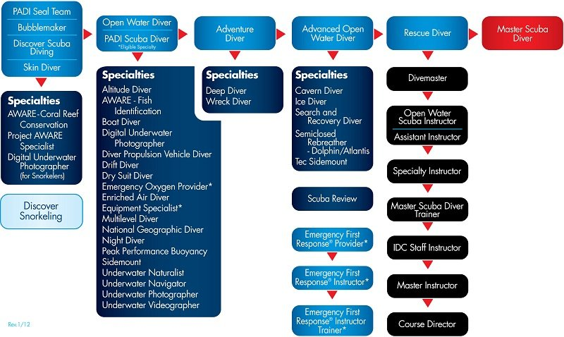 organigrama cursos PADI
