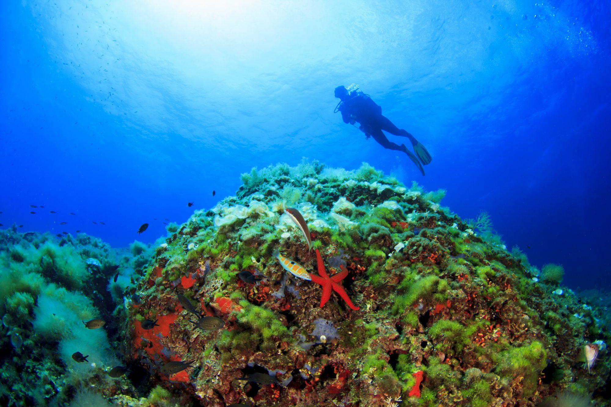 buceo en mallorca, arrecife