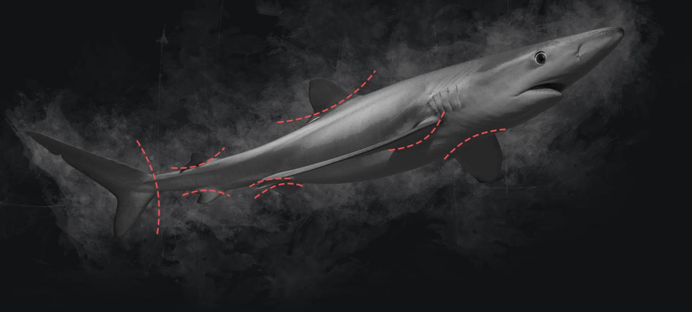 conservacion tiburones aletas