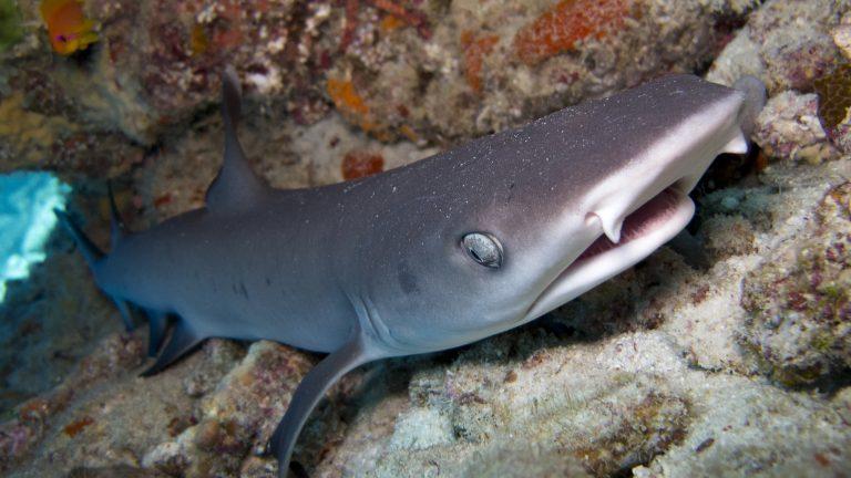 conservacion tiburones portada