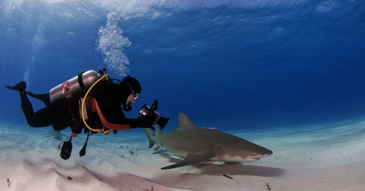 conservacion tiburones buzo