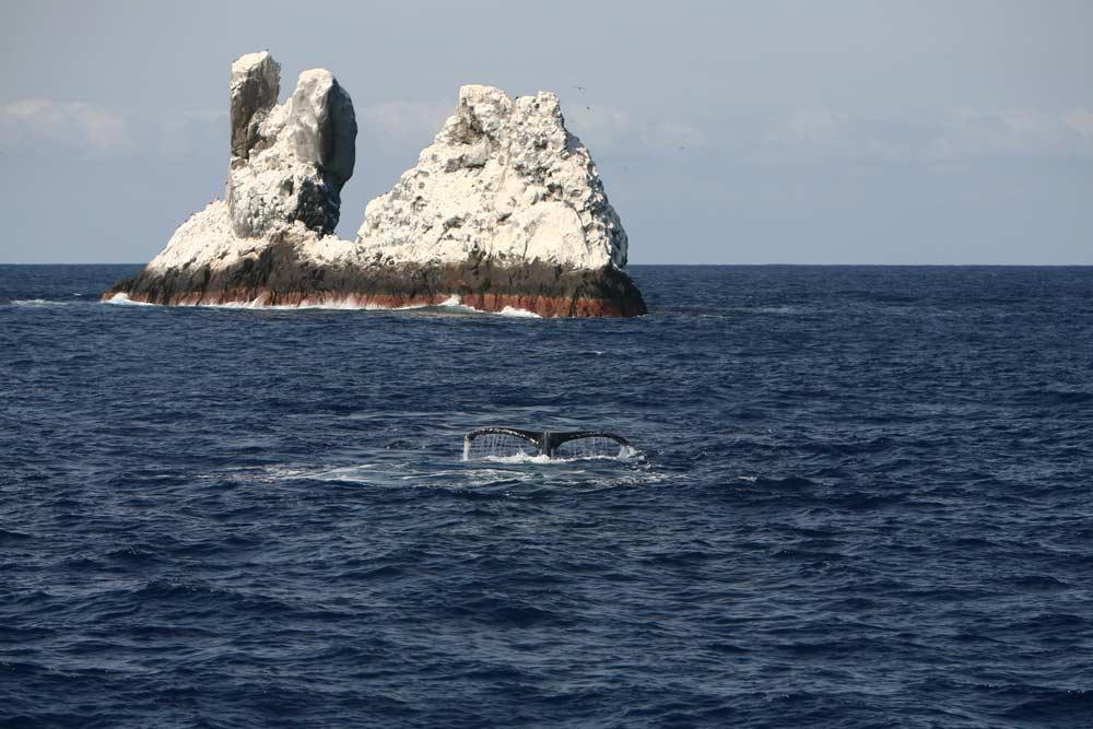 roca partida ballena
