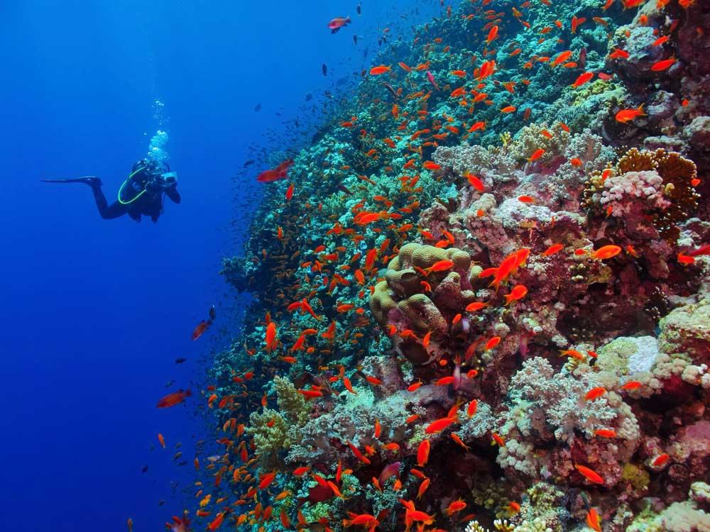 buceo en dahab arrecife