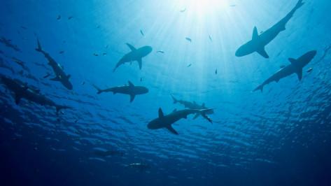 buceo tiburones mejico portada